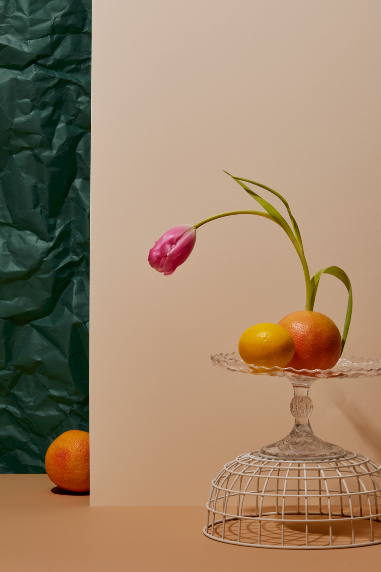 Tulips and Shy Citrus